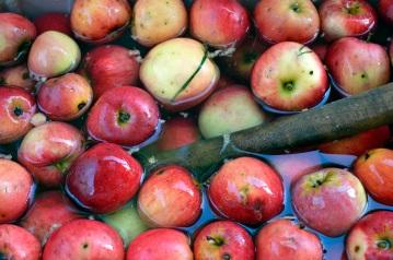 Apple Pressing 2015 Apple Bucket