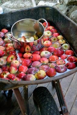 Apple Pressing 2015 Wheelbarrow Washing