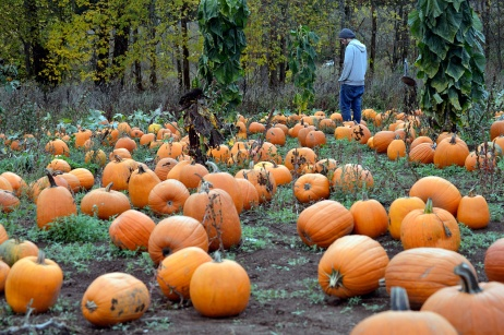 Parkerosa Farms Pumpkin Patch
