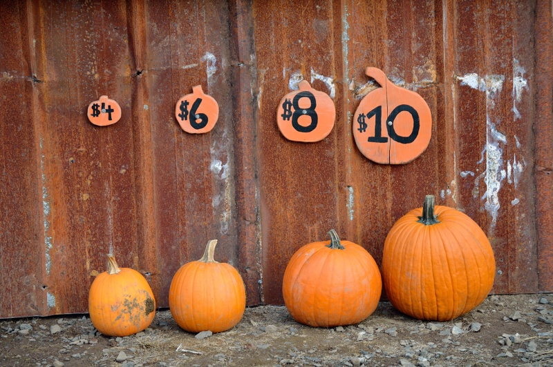 Parkerosa Farms Pumpkin Lineup